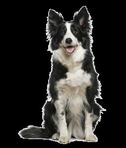 Bone-A-Fide Dog Shampoo