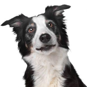 Clean Dog Bone-A-Fide Dog Shampoo