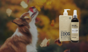 Clean Dog Shampoo