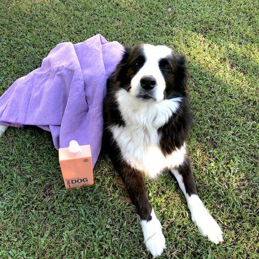 Clean Dog Shampoo